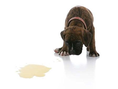 Вредные собачьи привычки. Кто в этом виноват и как это исправить?