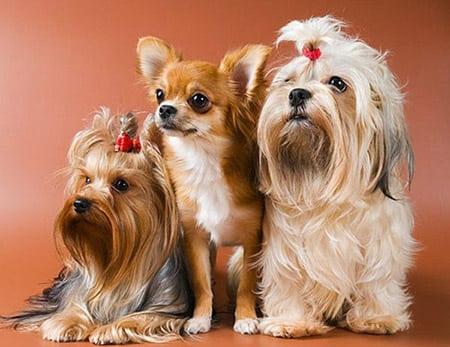 Собаки не для квартиры?