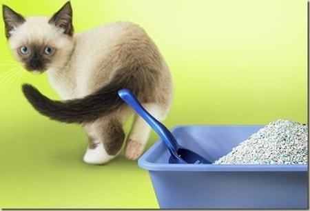 Как избавиться от неприятного кошачьего запаха