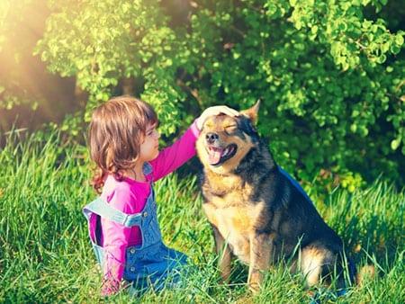Уберечь собаку от паразитов