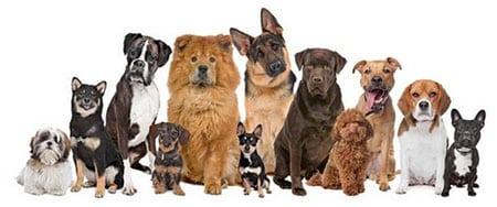 Прежде чем завести собаку посоветуйтесь со всеми членами семьи