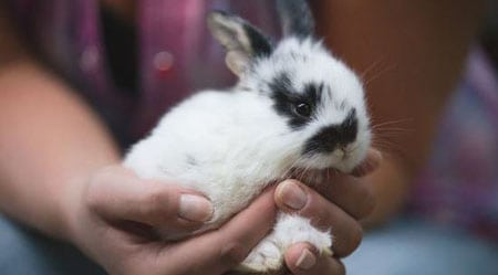 Покупаем декоративного кролика личный опыт