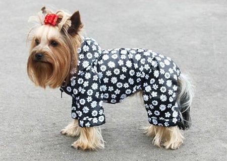 Выбираем одежду для собаки