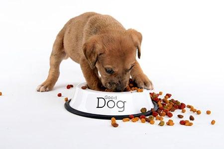Корм для вашей собаки