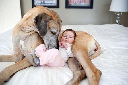 Собака в семье с детьми