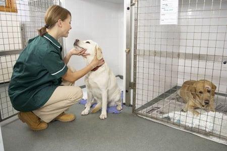 Стационар в ветеринарии