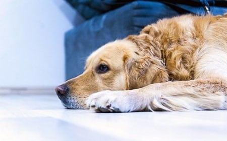 Как избавиться от собачьего запаха в доме
