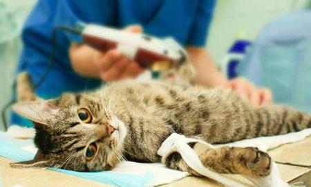 Кастрация животных: плюсы и минусы