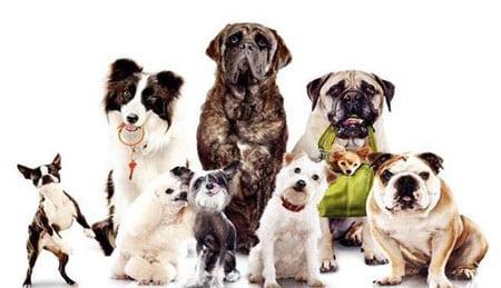 Как правильно выбрать породу домашней собаки