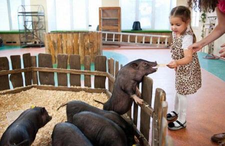 Контактный зоопарк это уникально место