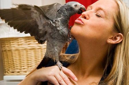 Как узнать, что птица больна
