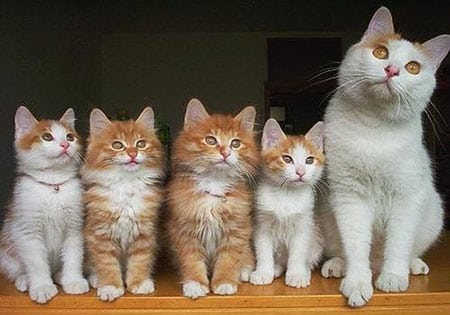 Кошка или кот – кого выбрать?