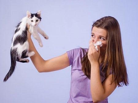 Может ли аллергик завести у себя дома питомца