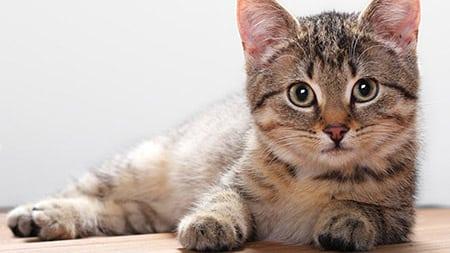 Пушистые любимцы: кошачьи загадки