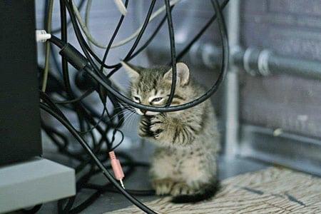 Поражение электрическим током и ожоги у кошек