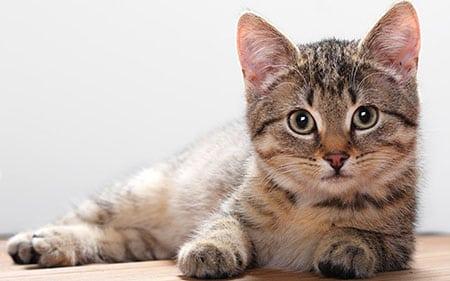 Кошка для ребенка… или собака?