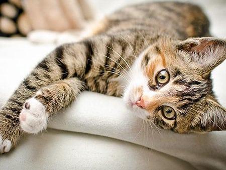 Животные вместо психотерапии