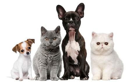 Как ухаживать за кошками Как ухаживать за собаками