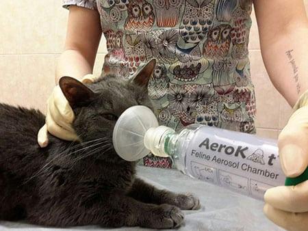 Астма у кошек что делать