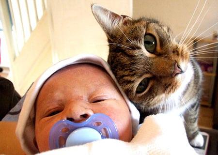 Кошки помощники