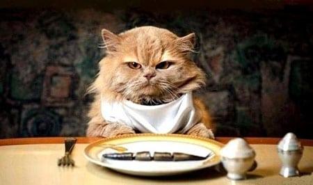 Сбалансированное питание кошки