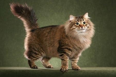 Особенности кошек