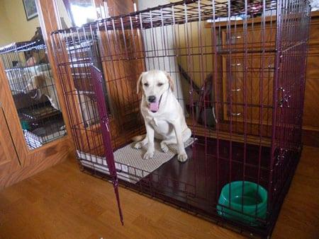 Клетка для собаки – второй дом