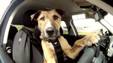 Транспортировка собаки