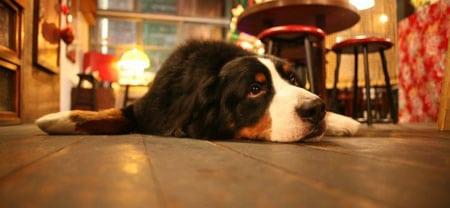 Безопасность собаки