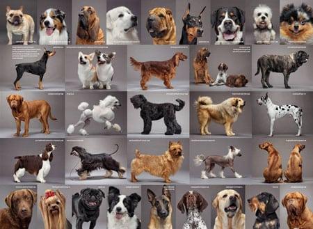 Как организовать питомник для собак