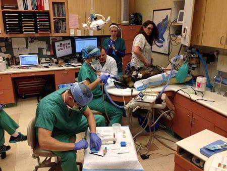 Стоматология в ветеринарии