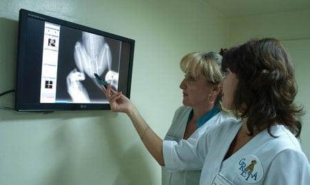Рентген диагностика в ветеринарии