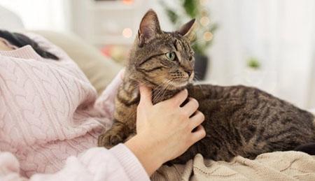 Поведение Вашей кошки