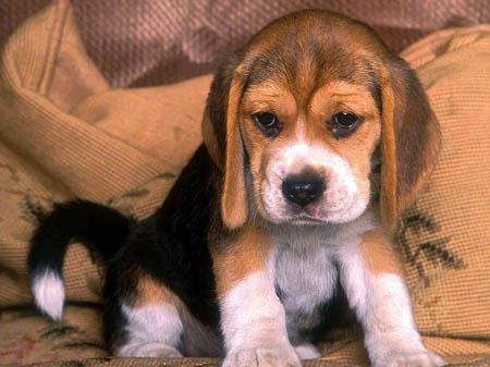 Советы по выбору гостиницы для собак