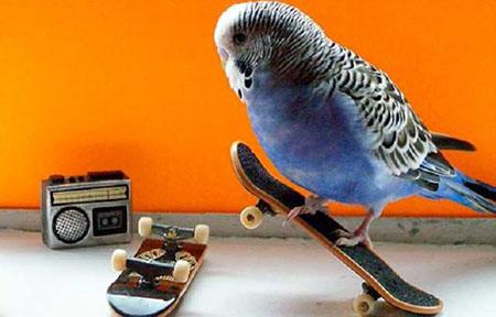 Птицы интеллектуалы